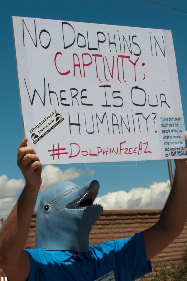 Los activistas exigen que los otros cuatro delfines que aún residen en el acuario sean trasladados de inmediato a un santuario (Foto: archivo)