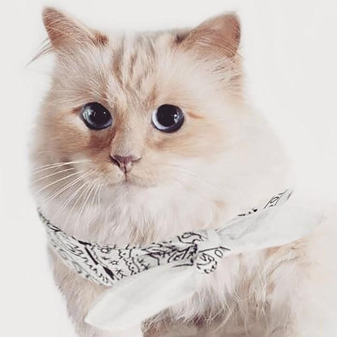 Choupette, con un pañuelo en el cuello