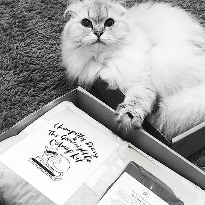 La gata publicita solamente productos de alta gama