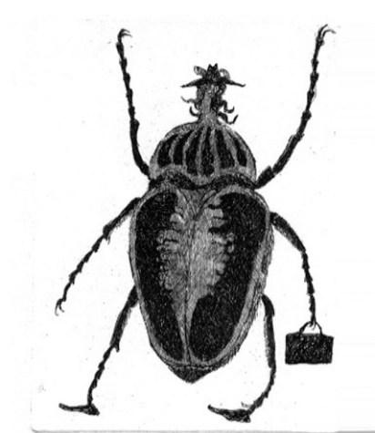 Insecto con portafolios
