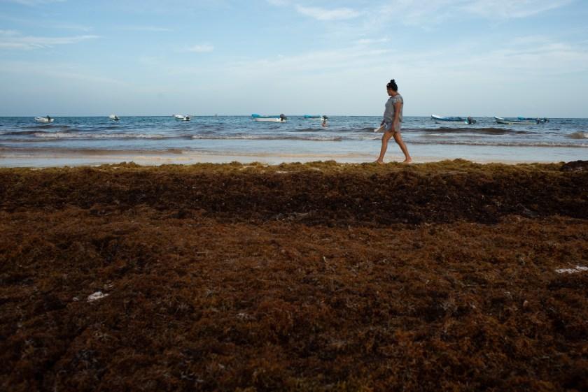 Detener el sargazo tras barreras de plástico flotantes en el mar, supondría una solución costosa que no es apta para todas las ubicaciones (Foto: Cuartoscuro)