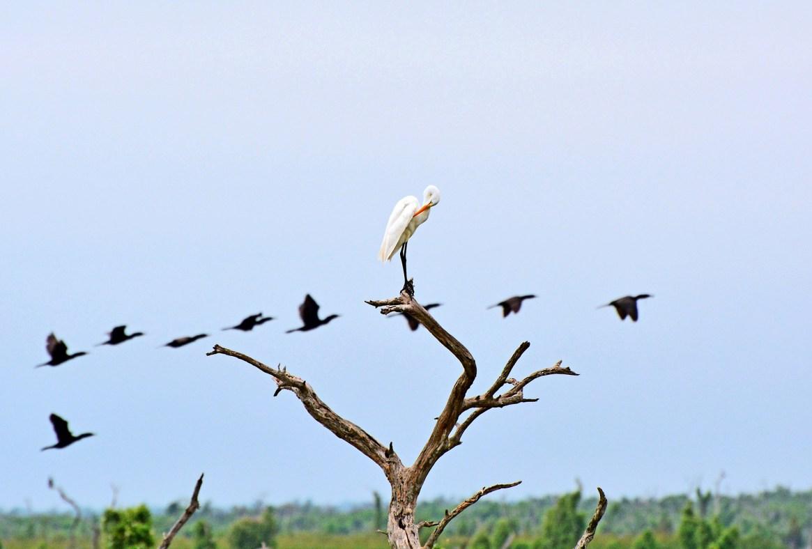 El ecosistema de este humedal es uno de sus mayores atractivos (Shutterstock)