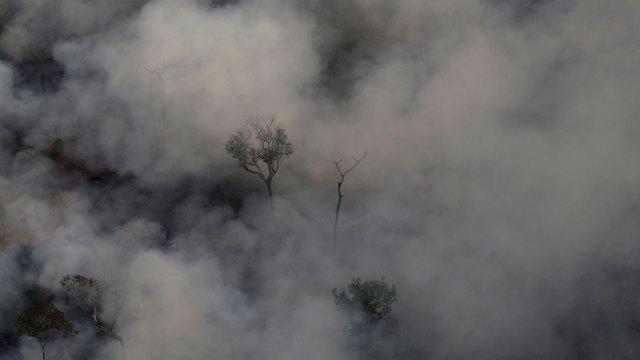 Muchos grupos ecologistas sostienen que las llamas son producto de la acción del hombre (Reuters)