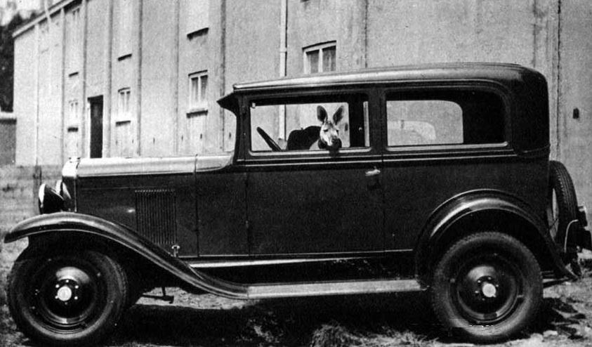 Kangaroo Driving Cab