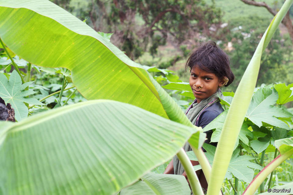 Una donna Dongria impegnata a raccogliere cibo, India.