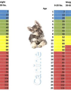 Cat and dog age chart also franklin falls animal clinic pet aging rh franklinfallsanimalclinic