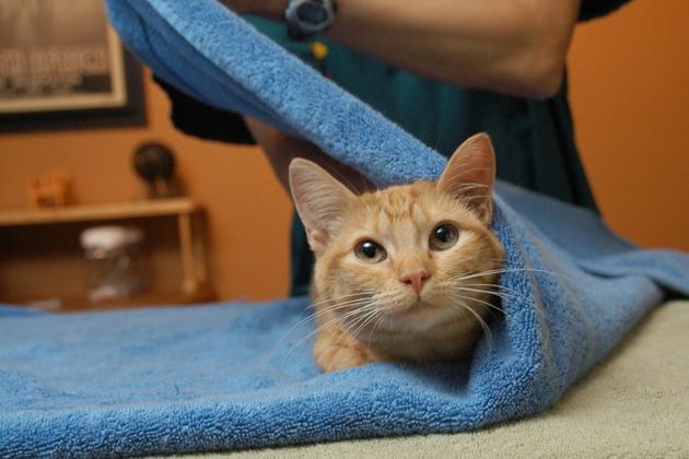 Passo 2 Cat toalha