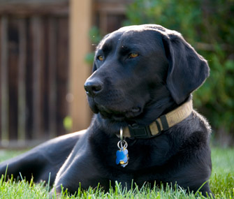 How To Pick The Perfect Dog Collar