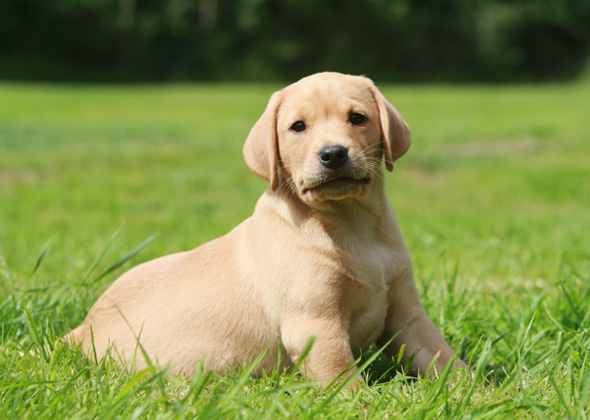 What Are The Best Dogs For First Time Owners Vets Place
