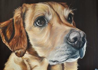 Animal Print Wallpaper Border Andy Murray S Girlfriend Launches Pet Portrait Site