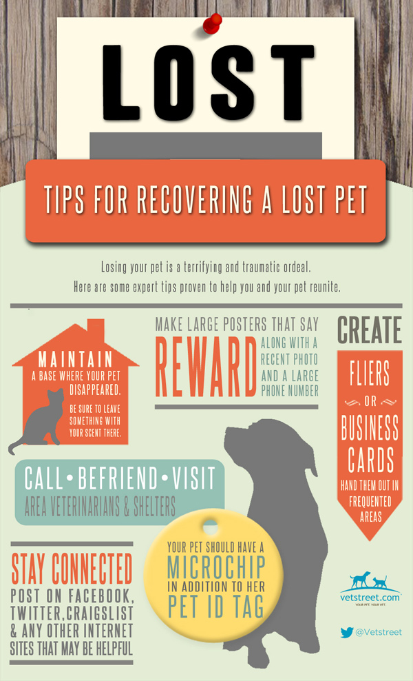 How to Find a Lost Cat or Dog - Infographic