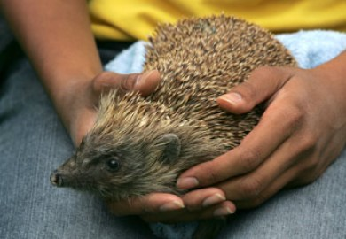 10 Things To Know Before Buying A Hedgehog Pet Place