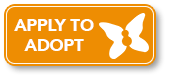apply to adopt