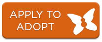 apply to adopt a child