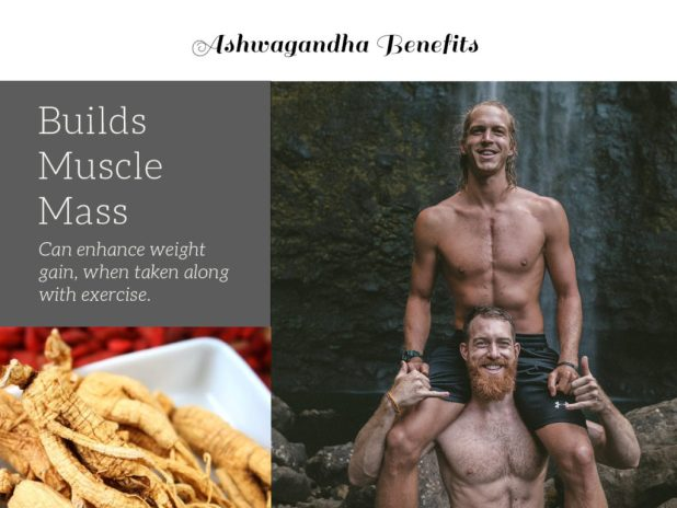 Two strong shirtless men demonstrate one of Ashwagandha benefits. It builds muscle mass! Also important: Ashwagandha side effects, Ashwagandha dosage. What is Ashwagandha? Ayurvedic herb.
