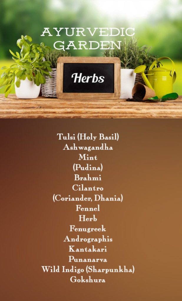 Ayurvedic medicinal herbs, garden herbs list.