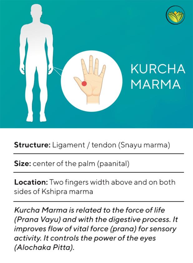 Kurcha Marma, Marma points of the feet.