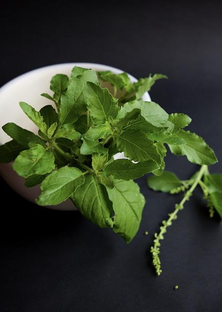 Tulsi, Ayurvedic herbs, Ayurveda herbs.