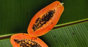 Papaya is used for Kapha type skin. How to do an Ayurvedic facial.
