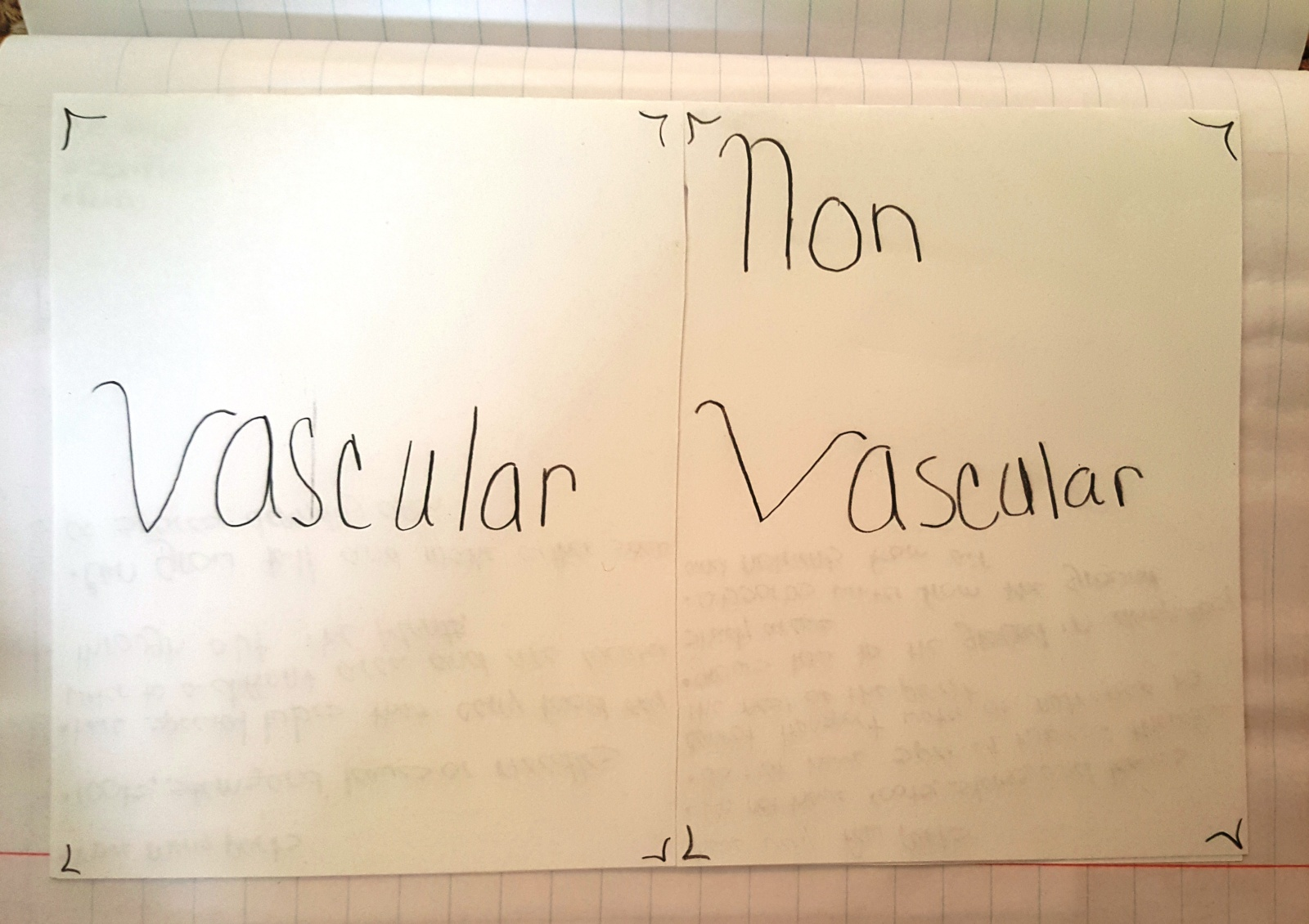 Lesson Plant Kingdom Classifying Vascular And