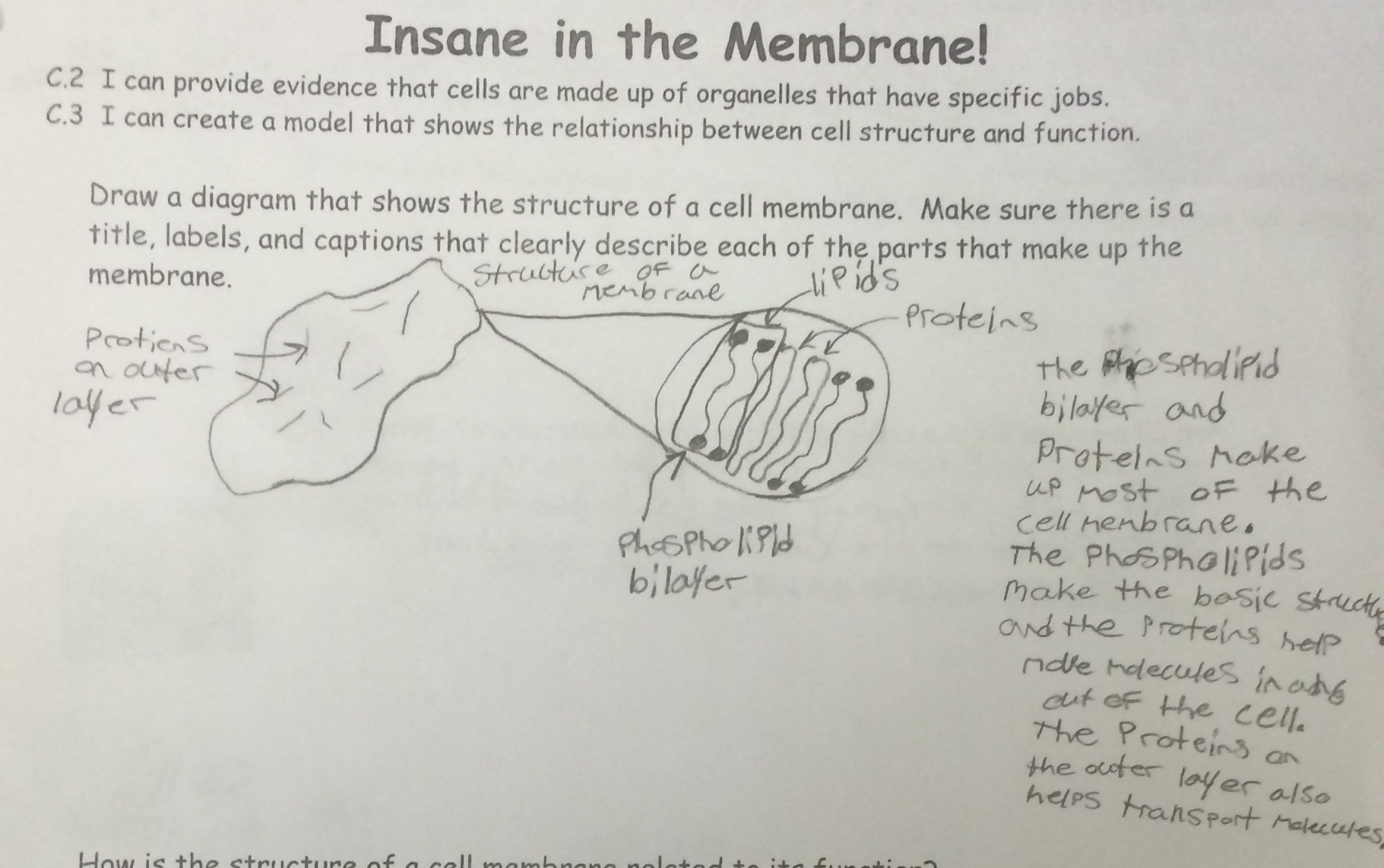 Label The Specializations Of The Plasma Membrane
