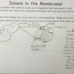 Cell Membrane Diagram Worksheet Omc Cobra Wiring Lesson Insane In The Betterlesson