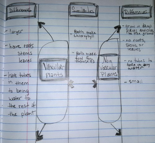 small resolution of Lesson Plant Kingdom...Classifying Vascular and Nonvascular Plants