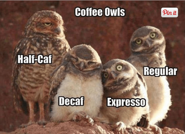 coffee-owls