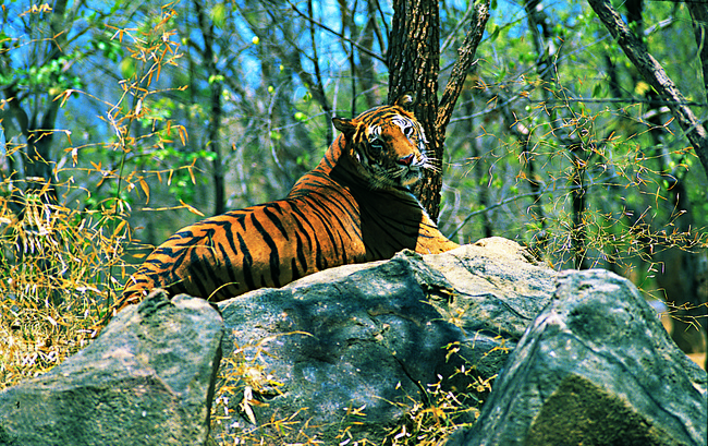 periyar-tiger-reserve-gavi-kerala
