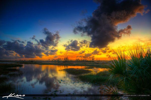 florida wetlands sunset pine glades