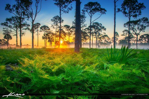 beautiful foggy morning sunrise