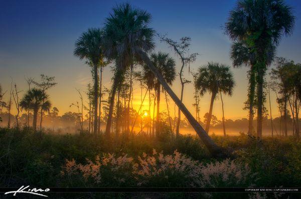 natural florida landscape foggy