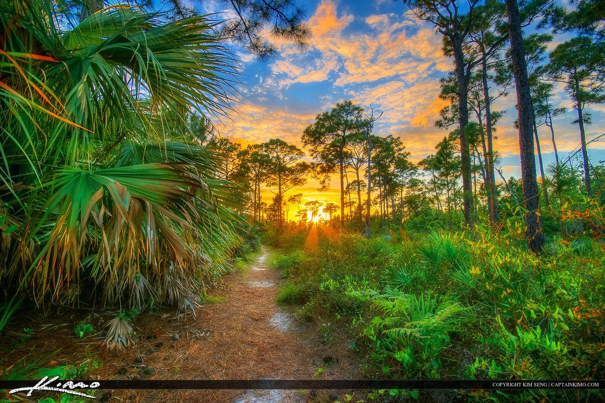 Stuart Florida Sunset Kiplinger Nature Preserve Trail Forest
