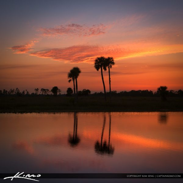 florida landscape sunset pine