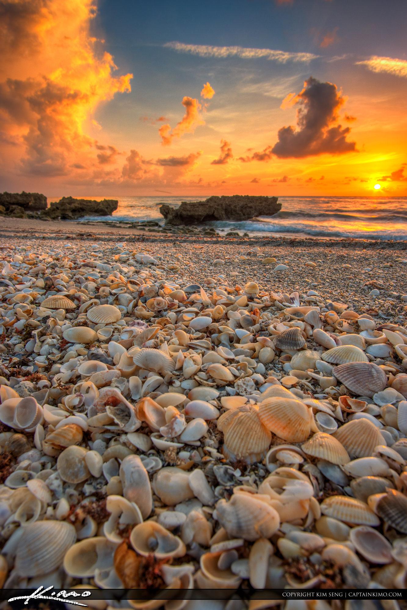 Seashell Sunrise from Beach in Florida