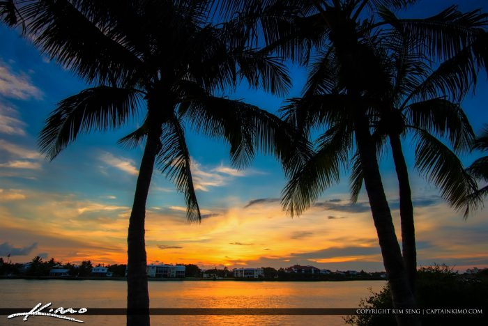 Amazon River Hd Wallpaper Two Coconut Trees South Florida Sunset