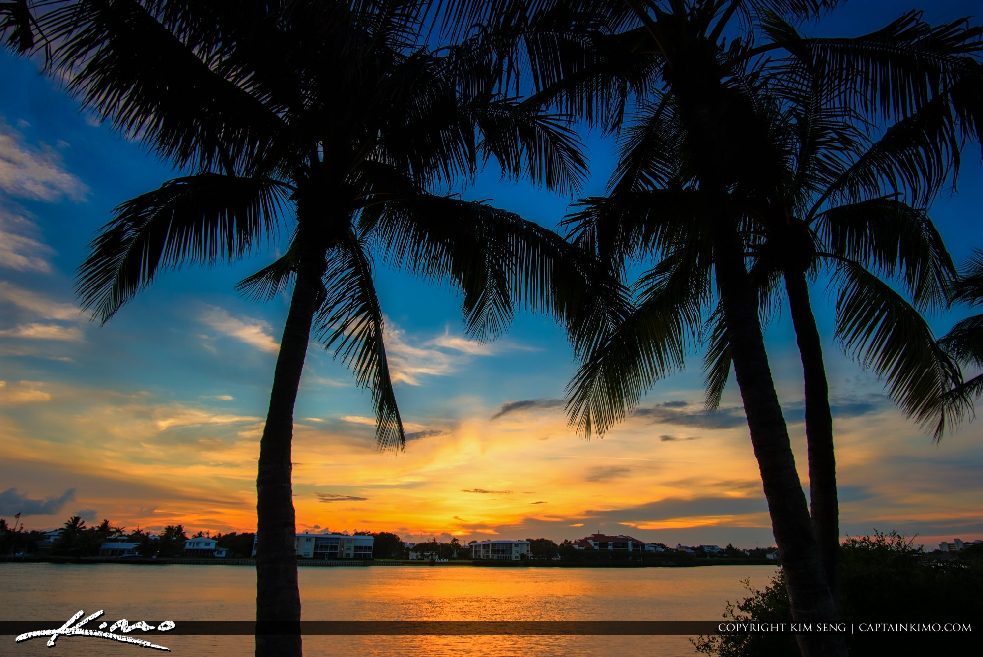 Two Coconut Trees South Florida Sunset
