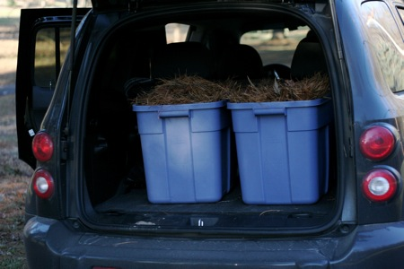 bins-in-back-of-car