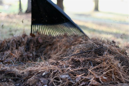 raking-pine-needles1