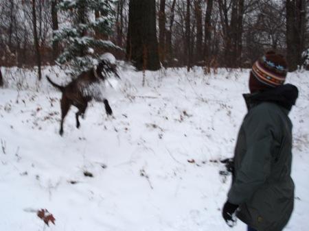 dog-catching-snowballs