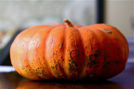 pumpkin-rouge-vif-detampes-side