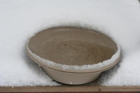 heated-bird-bath