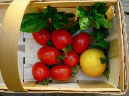 basket-of-tomatoes1