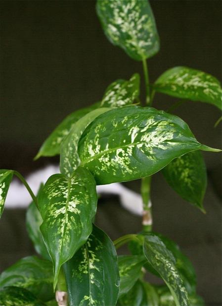 Houseplants And Clean Air Chiot S Run