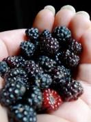 handfull-of-berries
