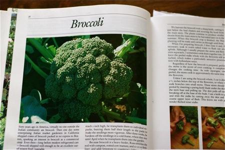 cooking-broccoli-image