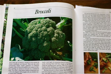 cooking-broccoli-image