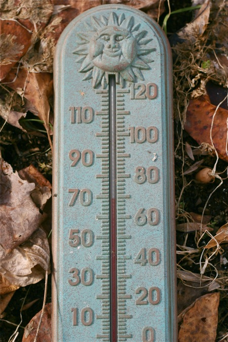 temperature-in-cold-frame