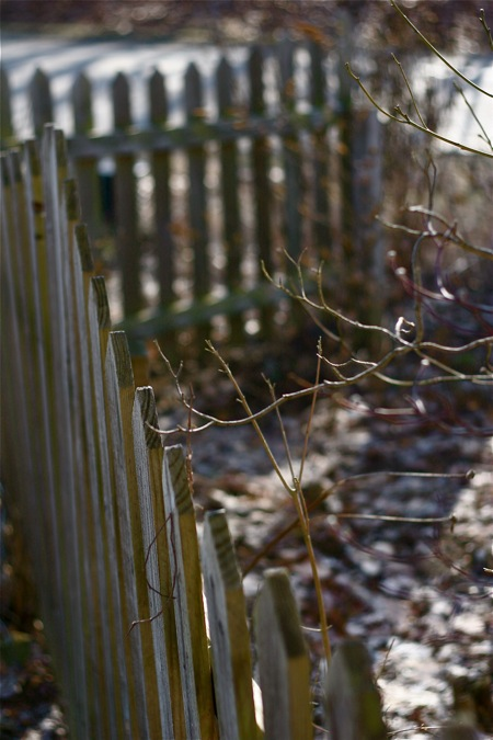 fenced-garden