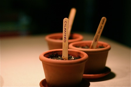 herbs-in-small-pots1